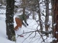CJ tree riding at Les Grandes Montets
